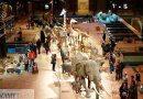 Muzeum Historii Naturalnej – Galeria ewolucji