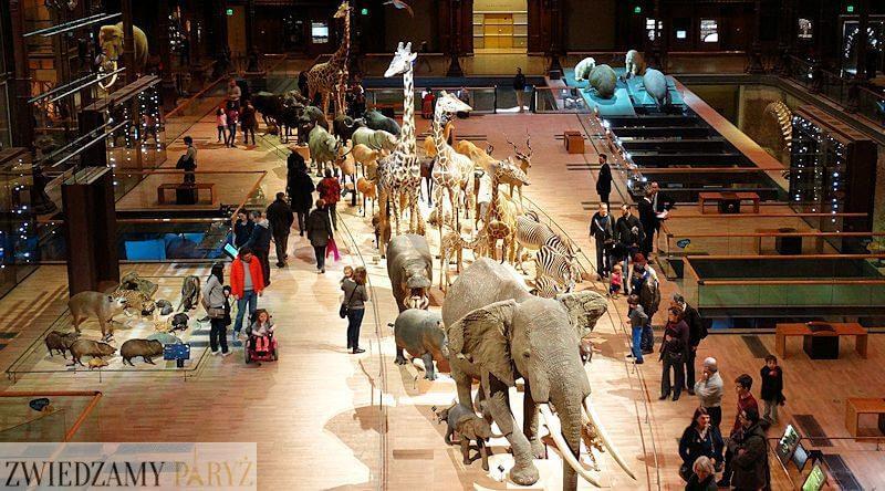 Muzeum Historii Naturalnej w Paryżu